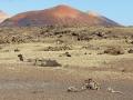Trekking entre les volcans, un must !