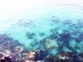 envie de plonger? des eaux limpides et un univers de vie vous attend