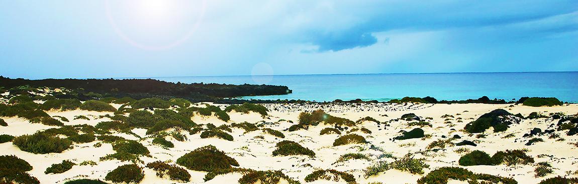 la terre et la mer s'unissent parfois pour le plaisir de nous surprendre