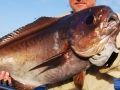 poissons de grand fond...le pompano